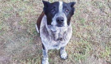 В Австралии старый пес нашел пропавшую девочку и грел ее всю ночь