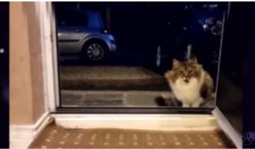 Парень сжалился и пустил в дом продрогшую кошку: утром его ждал сюрприз