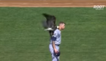 Орел приземлился на американского бейсболиста во время гимна