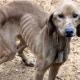 Дорожный работник увидел собаку, и сердце дрогнуло
