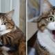 Кот с шикарной мимикой стал звездой интернета