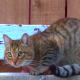 С легкой руки канадского музыканта уличный кот стал звездой интернета