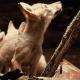 Необычные случаи с домашними животными Чернобыля