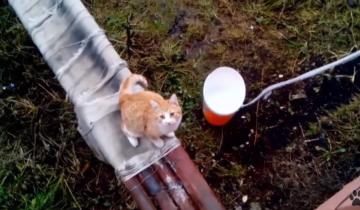 «Кошачий лифт» в действии: вот умнейшее животное