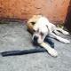 Больной брошенный пес решил тихо и незаметно умереть