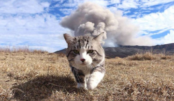 Самый фотогеничный кот на свете стал звездой интернета