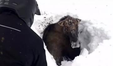Катаясь на снегоходах, парни увидели темное пятно на снегу