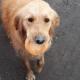 Бездомный пес с засохшей булочкой покорил интернет