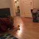 Девушка, которая решила напугать кота подруги, стала звездой интернета