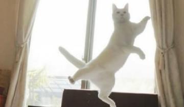 Кошачьи танцы: какие они красивые и грациозные