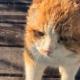 Безухий кот пришел на крыльцо, чтобы поживиться хотя бы объедками
