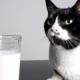 Знаете ли вы, что кошки… ненавидят молоко?! 12 удивительных фактов