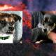 Две собаки оказались в ловушке из-за извержения вулкана на Гавайях