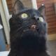 Первая в жизни кота прогулка на балконе: неподдельные эмоции