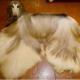 Настоящая Рапунцель собачьего мира: неужели такое бывает?