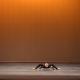 Зрелищный «танец паука» собрал 12 млн. просмотров