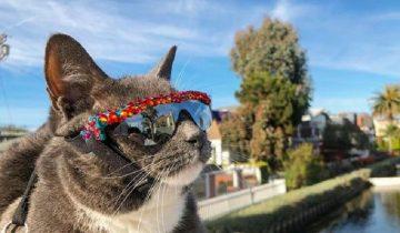 Кошка стала модницей, потому что родилась без век