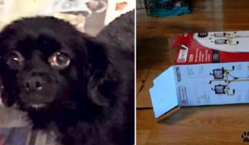 Собачка стояла на оживленной трассе и пыталась открыть коробку