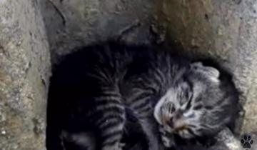 Маленький котенок лежал, свернувшись, на холодном бетонном полу