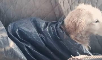 Инфекция спасла жизнь этой собаки, оставив ее без лап