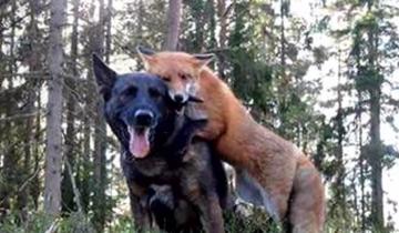 Каждый день пес зачем-то убегал в лес. Когда хозяин узнал причину, был шокирован