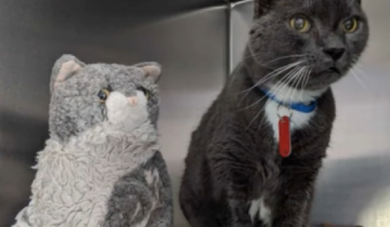 После смерти хозяина кот потерял веру в людей