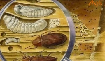 8 опасных насекомых, которые обитают по соседству с нами