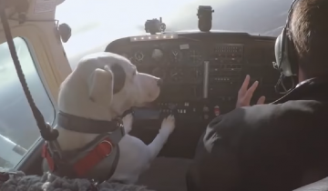 Некоторые собаки умеют такое, что не всякому человеку по силам