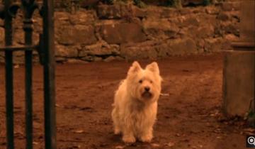 Истории о самых преданных собаках (2,3 млн. просмотров)