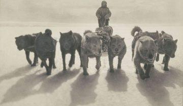 Редчайшие фото антарктической экспедиции 100-летней давности