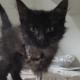 История любви маленькой трехлапой кошечки