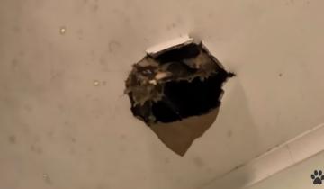 Девушка увидела дыру в потолке. Из нее смотрели испуганные глаза