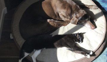 Удивительная история дружбы: кошка и собака сблизились через 13 лет