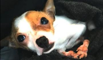 Мужчина решил усыпить собачку из-за… кривеньких лапок