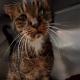 Кот жил на улице, не зная любви. Но когда попал приют, то всех поразил