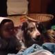 Скажи «мама»: малыш и пес соревнуются друг с другом