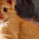 Едва увидев мордашку котика, от него испуганно шарахались