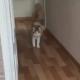 Кот, которому все равно, как его зовут, стал героем сети