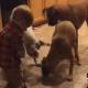 В комнате, где был малыш и три собаки, воцарилась пугающая тишина