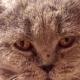 Увидев глаза кота, облизывающего обертки, девушка не прошла мимо