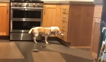 Очень сообразительный щенок стал героем сети