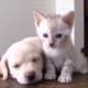 Когда кошки и собаки — лучшие друзья