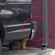 Немецкая овчарка несколько дней пряталась за машиной
