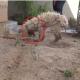 Собаку нашли истощавшей, с мордочкой, облитой кислотой. И какой она стала!