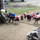 Настоящая пижама-пати для маленьких козлят
