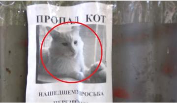 Ролик с фотографией пропавшего кота испугал пользователей сети