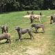 Когда этих собак нашли, они были похожи на гипсовые скульптуры