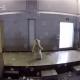 Ролик о взрослении белого медвежонка собрал 1,2 млн. просмотров