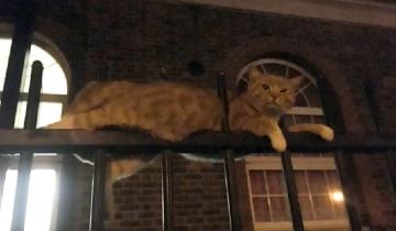 Когда мужчина увидел кота на заборе, думал, что тот просто отдыхает