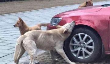 10 животных, отомстивших людям по справедливости